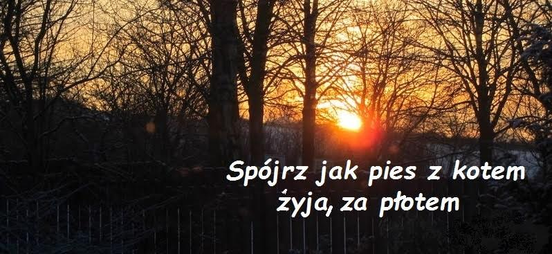 FB - Spójrz jak pies z kotem żyją za płotem