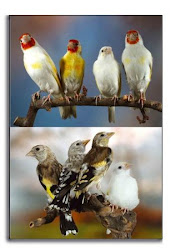 birdsarabic