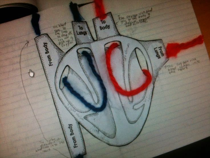 Idea P&P Sains : Darah Beroksigen dan Darah Terdeoksigen
