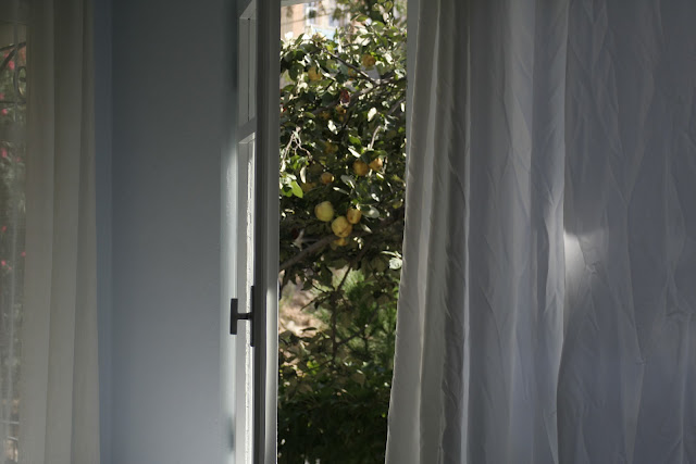 The quince outside the window.