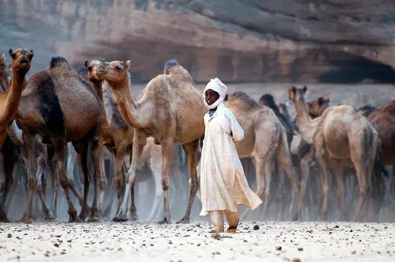 The Guelta d'Archei is the most famous permanent water source in the Ennedi region of Chad. Everyday, hundreds of camels are herded into the guelta in order to drink. That particular morning, one of the herdsmen was claiming that 850 of them were at once in the guelta. The value of a camel ranges between 250 EUR up to 800 EUR (and more). They are mainly raised for the milk they produce and as transport animals (not for the meat).