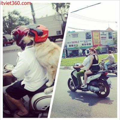 Những hình hài hước vui nhộn nhất, chó đội mũ bảo hiểm còn hơn người