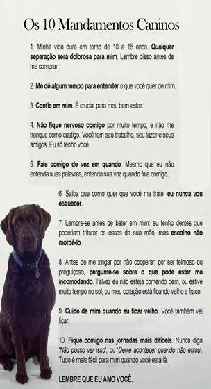 Os 10 mandamentos de um cão!