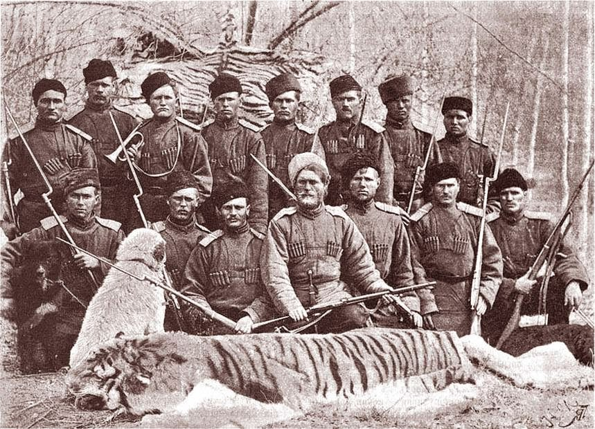 an essay on the subspecies of tigers Below is an essay on tigers from anti essays, your source for research papers, essays, and term paper examples  siberian or amur tigers-they are the largest subspecies of the tiger.