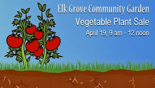Elk Grove Community Garden Vegetable Plant Sale