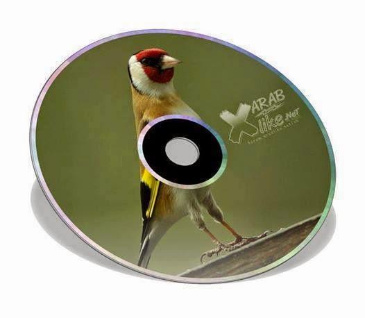 شريط mp3 لطائر الحسون بطل المغرب 2012 بجودة عالية