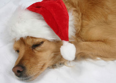 Funny Christmas Animal