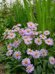 Les plantes vivaces du Châtel des vivaces