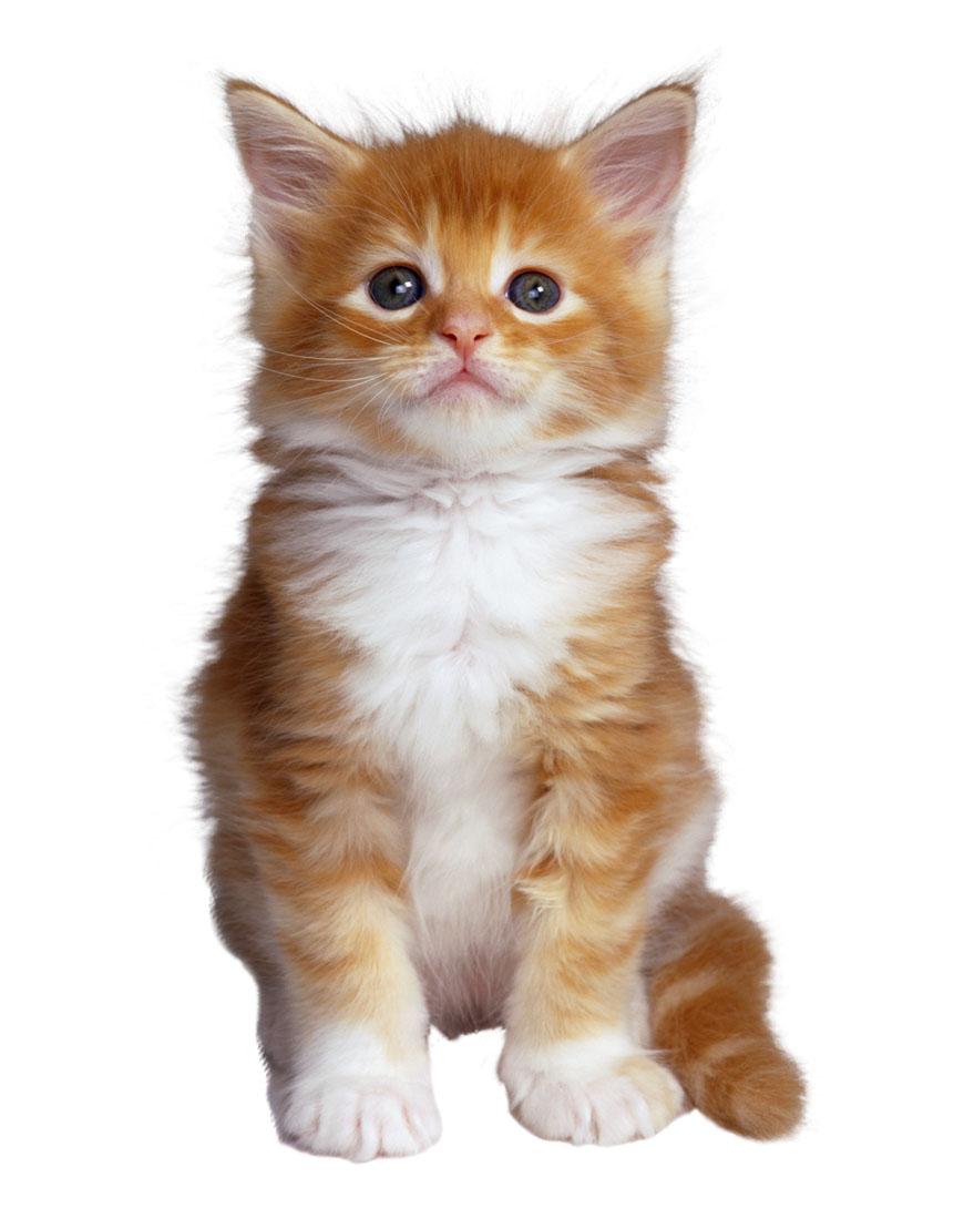 La frikoteca jugando con ni os aventuras de gatitos - Fundas para unas de gato ...
