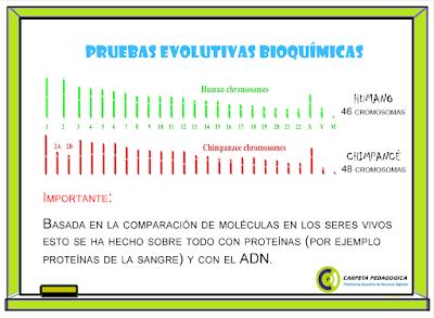 Pruebas Evolutivas Bioquímicas