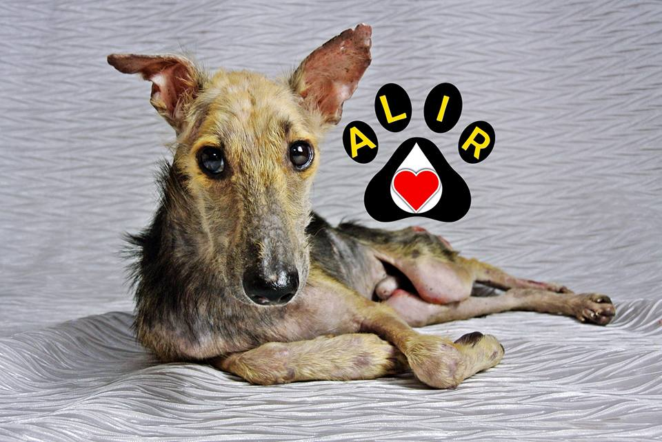 Donate to ALIR