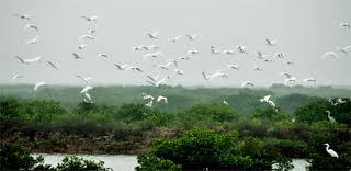 cho thuê xe ở tại Nam Đinh- Vườn Quốc gia Xuân Thủy