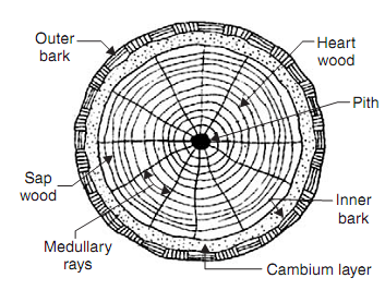 Signature Tree Service: ANATOMY OF A REDWOOD & OAK TREE (Exogenous ...