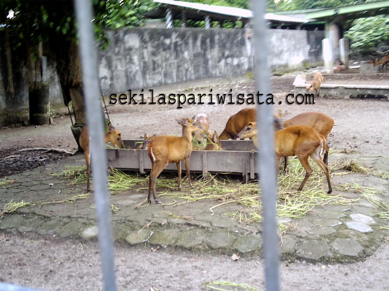 objek wisata kebun binatang