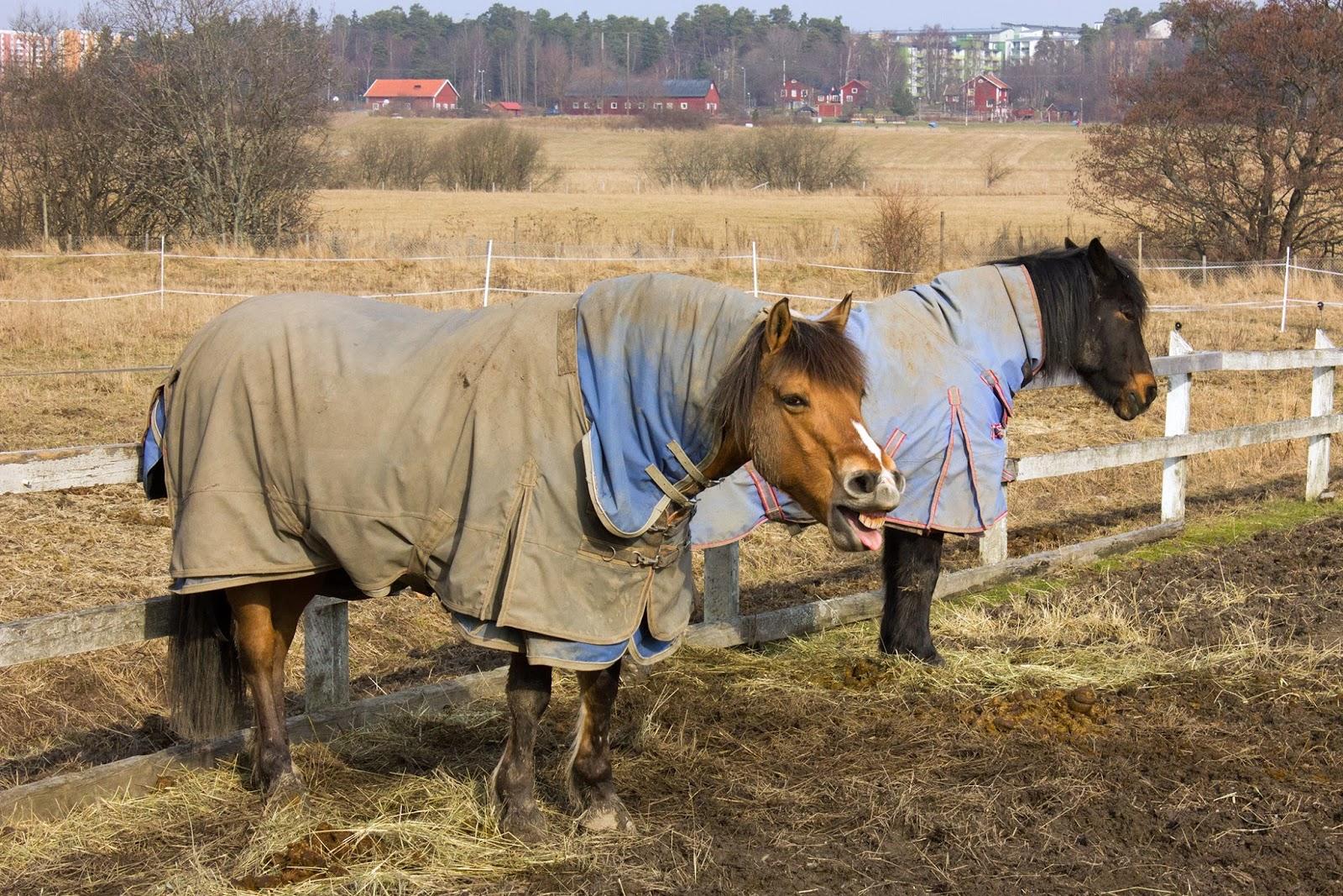 прикольные лошади фото