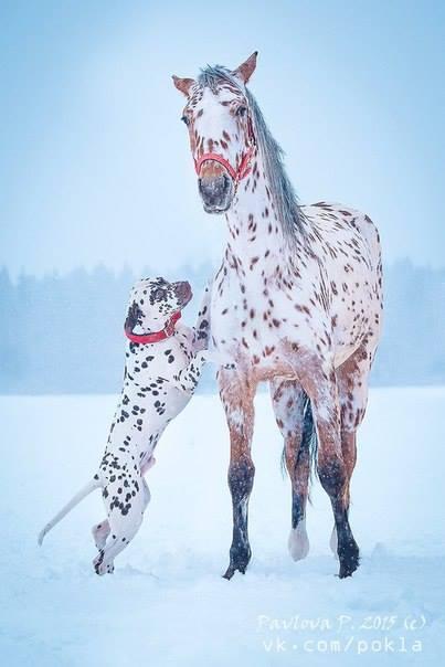 Horse Cartoon Tacchi a Cavallo: The ...