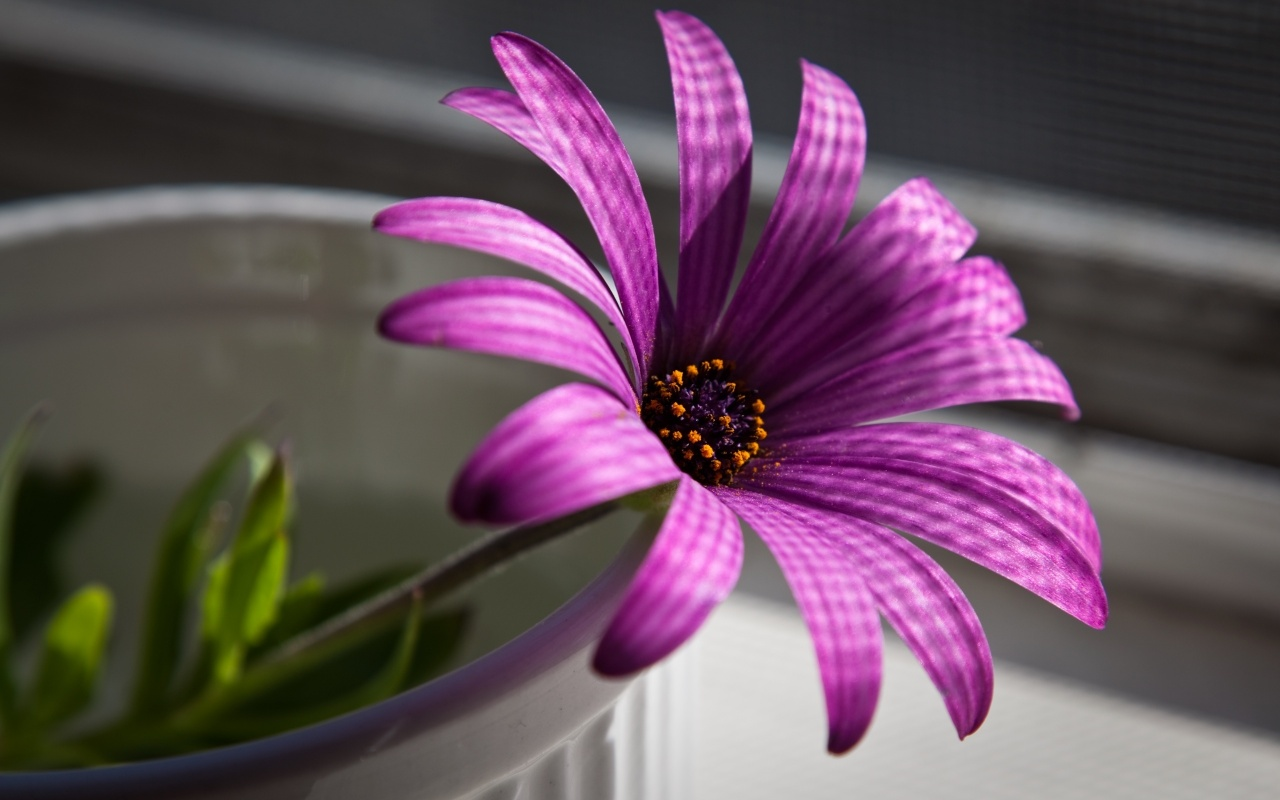 Free Wallpaper Best Purple Flower