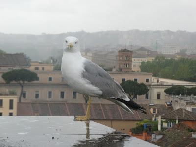 A bird in Rome