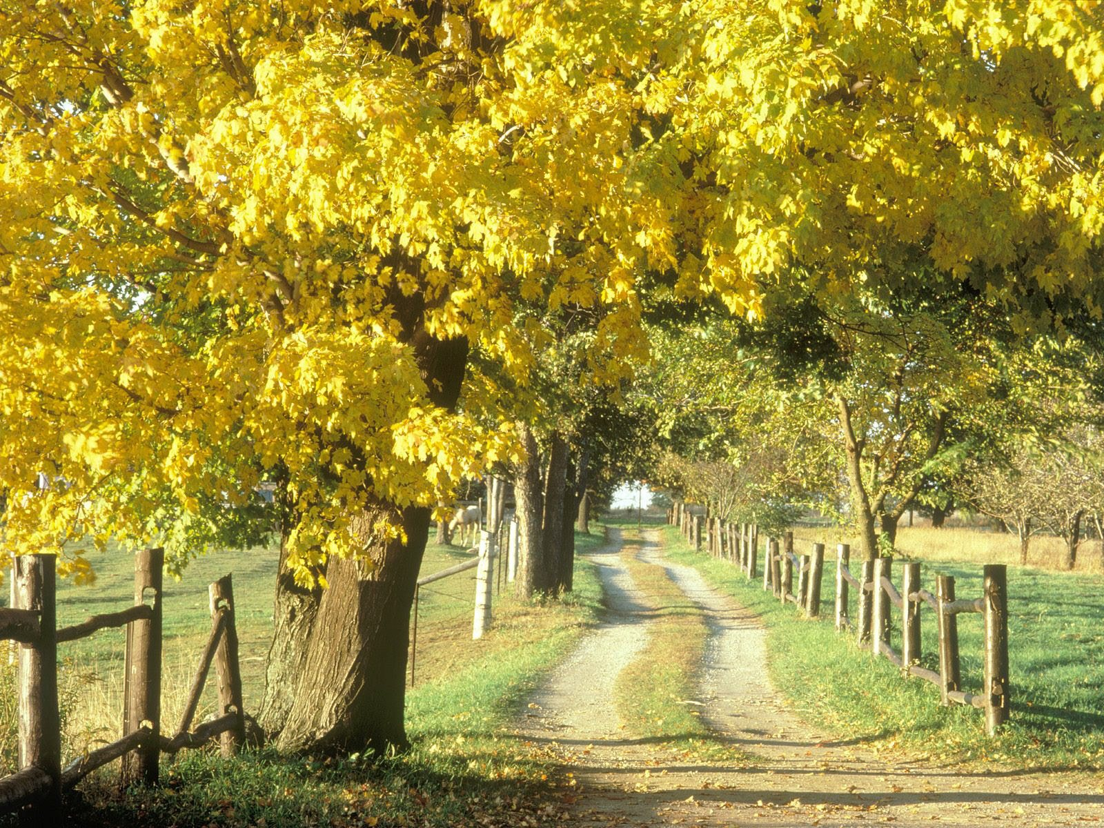 Autumn Country Road Canada