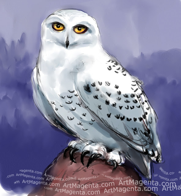 Snowy Owl sketch painting. Bird art drawing by illustrator Artmagenta.
