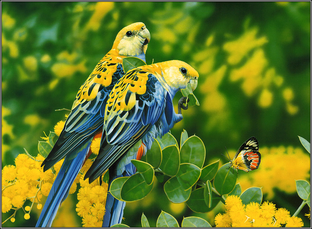 PicturesPool: Love Birds Wallpapers  Beautiful Birds Pictures