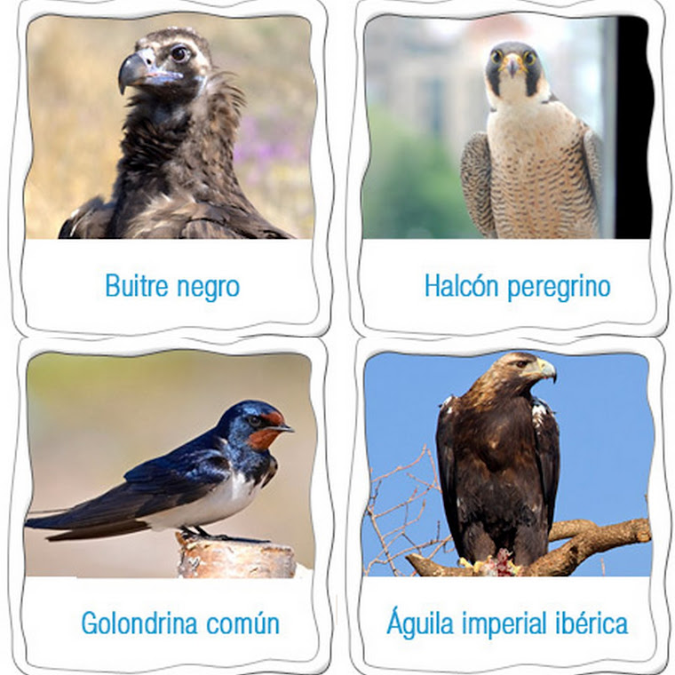 WEBCAMS SEO / BIRDLIFE
