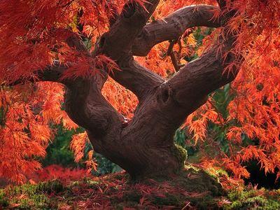 Se non ci fossero questi colori, odierei l'autunno