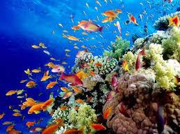 Ο μεγάλος κοραλλιογενής ύφαλος κινδυνεύει