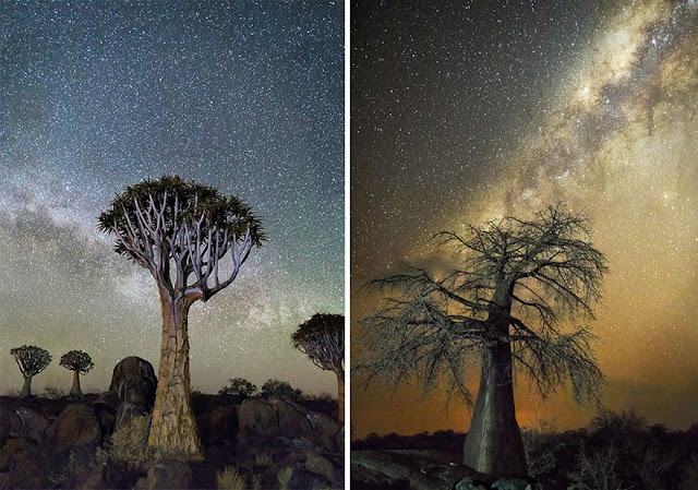 oldest trees beth moon diamond nights photography-1