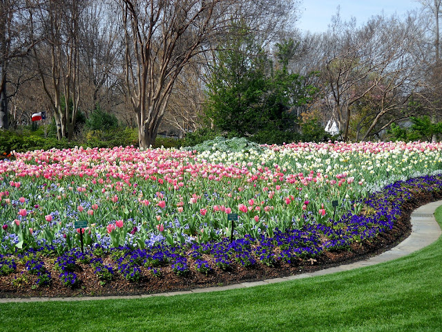Stunning tulips at the Dallas Arboretum - Dallas Blooms 2012