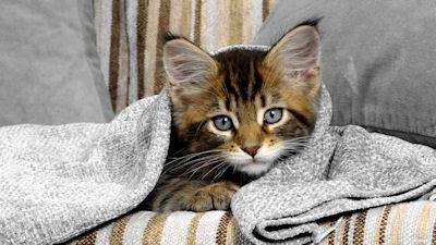 Mi mascota preferida; ¡Un lindo gatito! - Little kitten