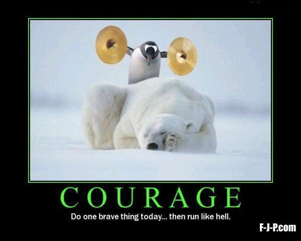 Penguin Polar Bear Courage Meme ~ Silly Bunt