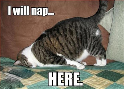 Funny Pictures Quotes Pics Jokes Memes Images Photos Cats Gift