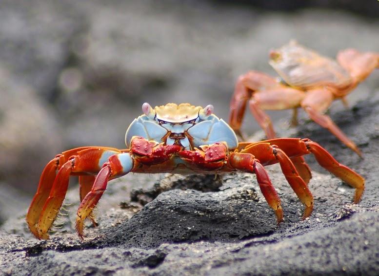 pics Galapagos Islands vacation fotos tourism