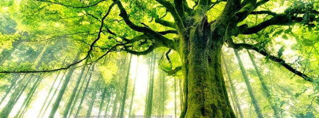صورة غلاف للفيس بوك
