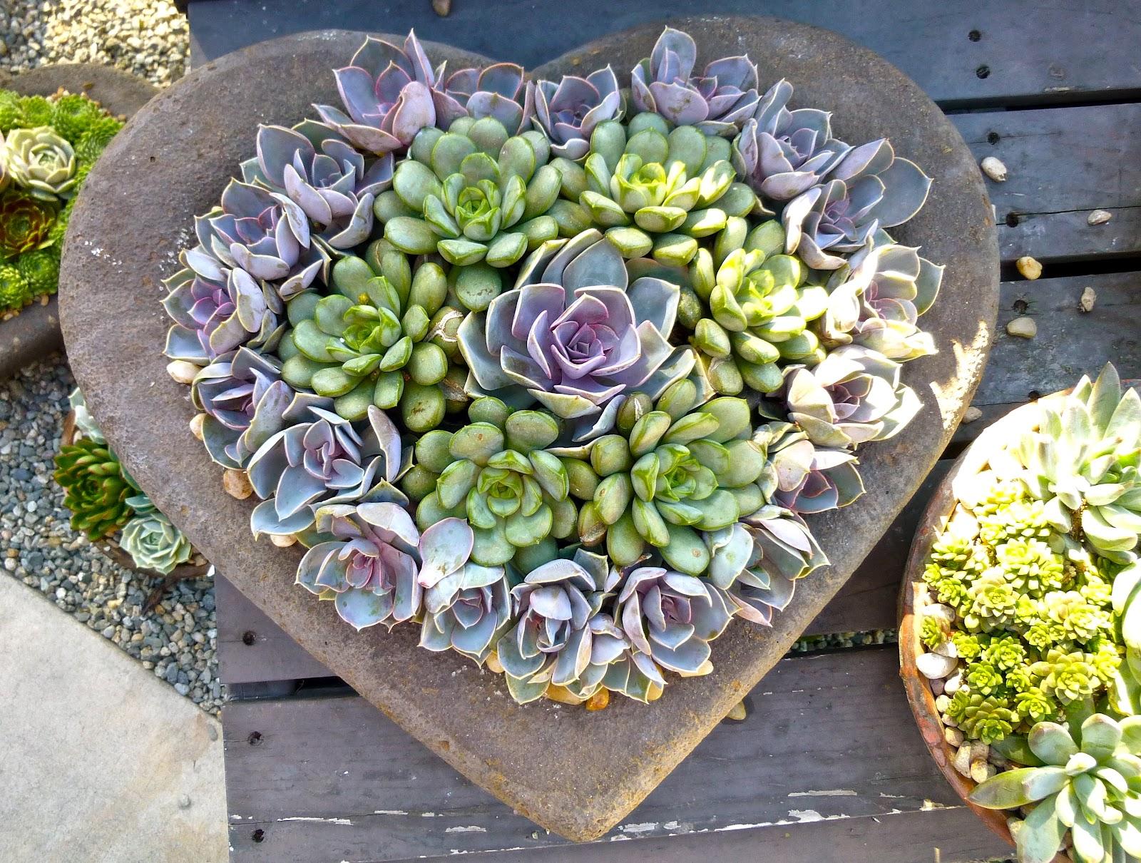 My California Garden in Zone 23 I Heart Succulents