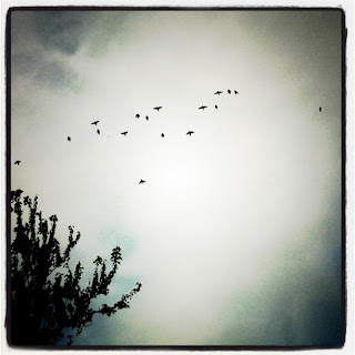 Birds-In-The-Sky-You-Know-How-I-Feel-Photograph-Michelle-Firment-Reid-Copyright-2011