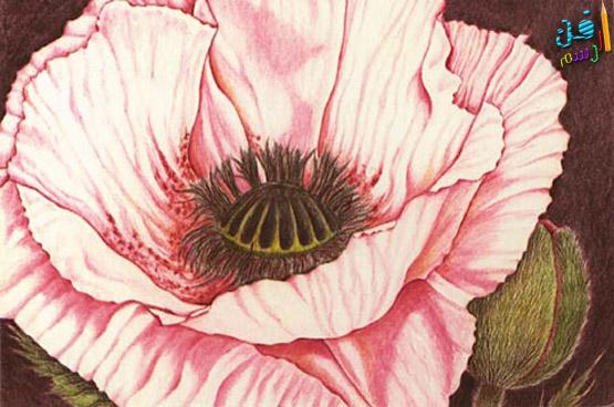 رسم وردة بالأقلام الخشبية