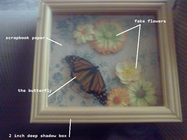 kiki kouture butterfly shadow box