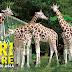 Paket Wisata Malang Batu Taman Safari Prigen 2 Hari 1 Malam