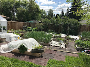 Gardening at home for 35 years