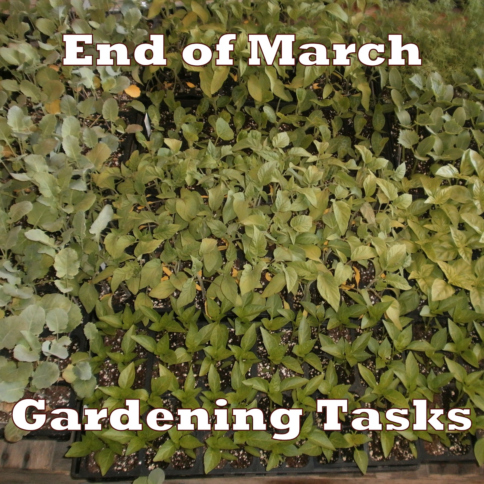 Essential March Gardening Tasks