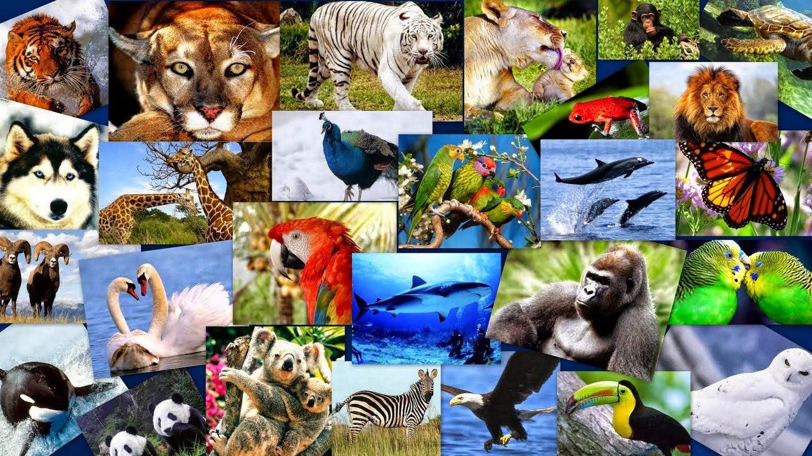 Animales en peligro de extinción El Informador - imagenes de animales en peligro de extincion en el mundo