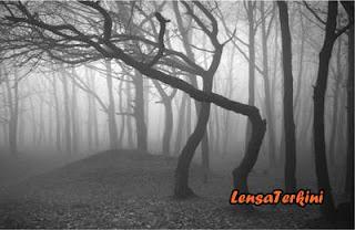 Hutan%2BHoia-Baciu.jpg