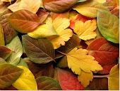 Ya huele a otoño...