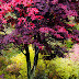 Colorful Autumn Tree Nature hd pics gallery