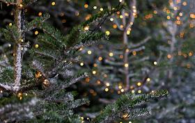 Nov-Dic son Navidad