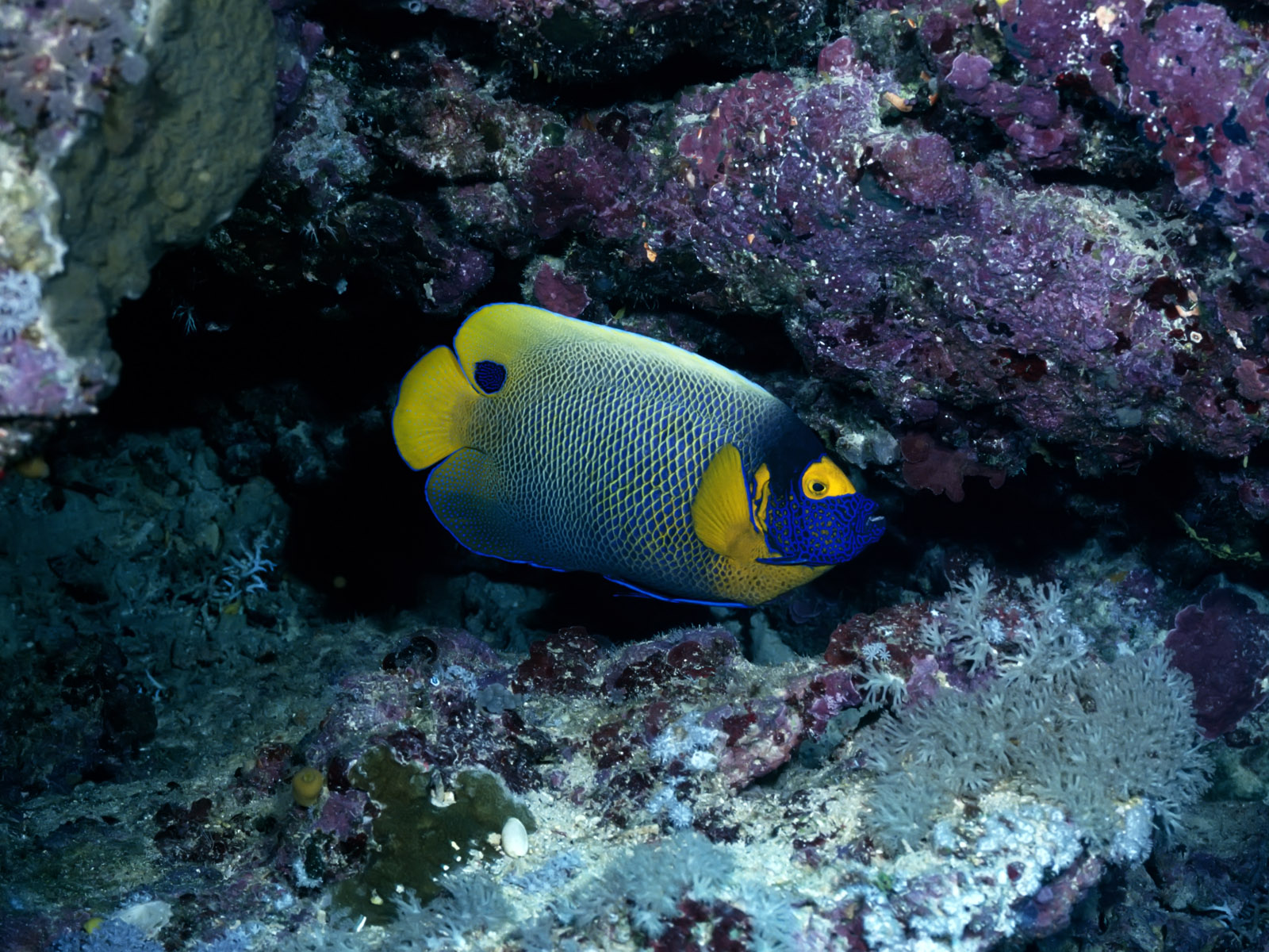 http://4.bp.blogspot.com/-rYj0y365dhc/TkvhsI_fYRI/AAAAAAAALo0/HeAuA1m8FLY/s1600/Underwater+Wallpapers+%252894%2529.jpg