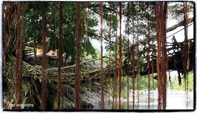 Minang Rancak – Uniknya Jembatan Akar di Bayang Kabupaten Pesisir Selatan