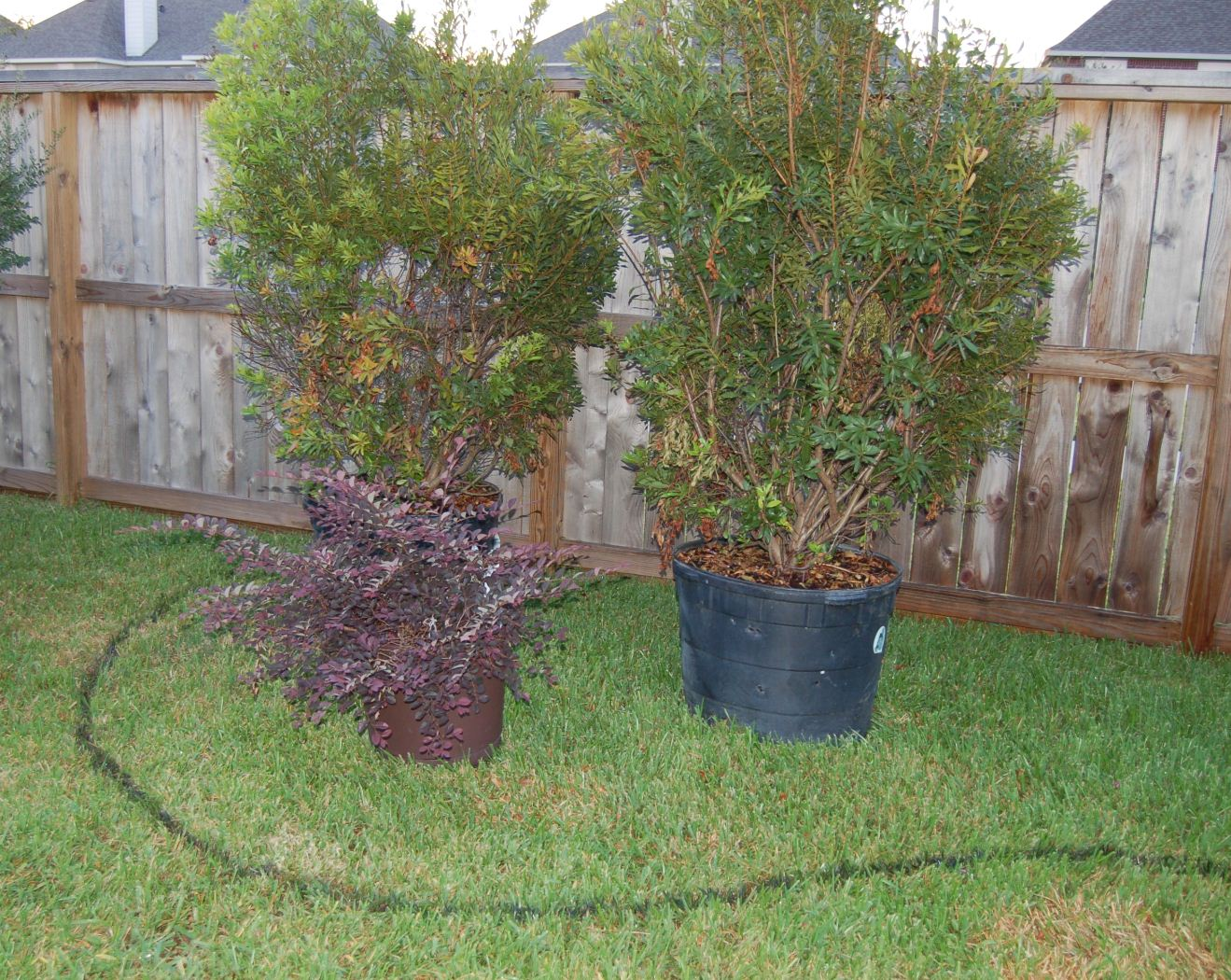 Centerpointe communicator landscaping made easy part 1 for Wax landscape